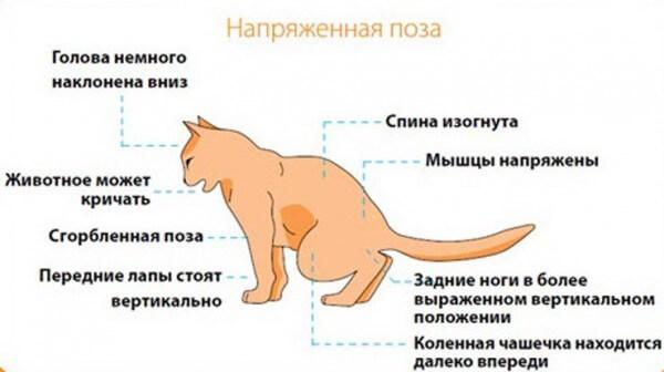мочекаменная болезнь у кошек