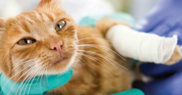 обработка раны кошке