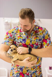 ветеринар-ортопед