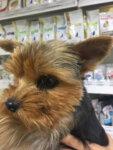 Лечение демодекоза у собаки