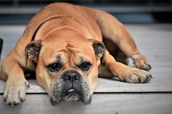 инородное тело у собаки