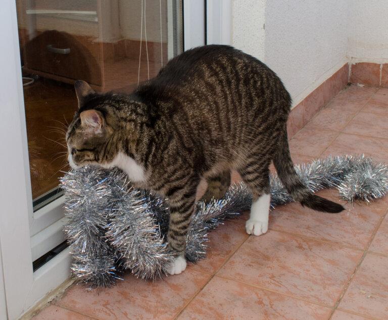 Кот ест мишуру