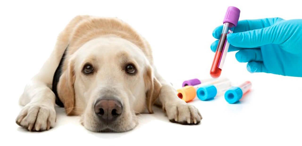 Анализы крови для животных