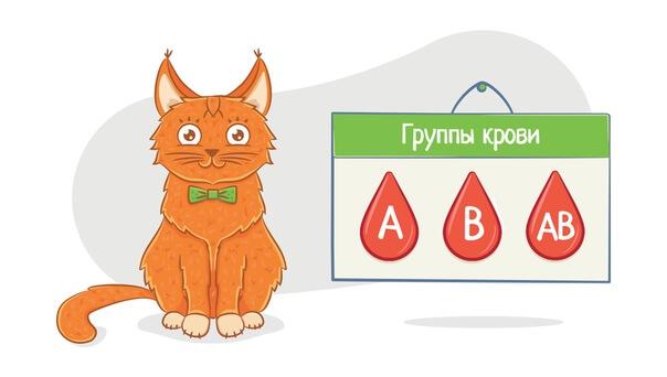 Группы крови кошек