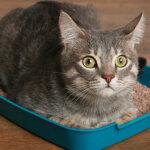 Идиопатический цистит кошек (ИЦК)