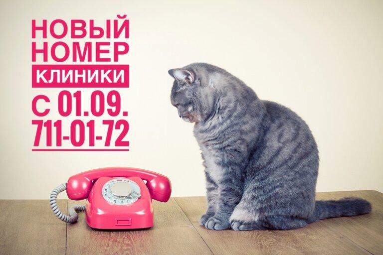 Телефон ветклиники Толстый Лори