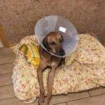 Острый влажный дерматит собак