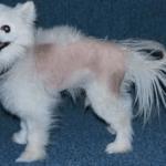 Условия, необходимые для постановки диагноза у животных с дерматологическими проблемами