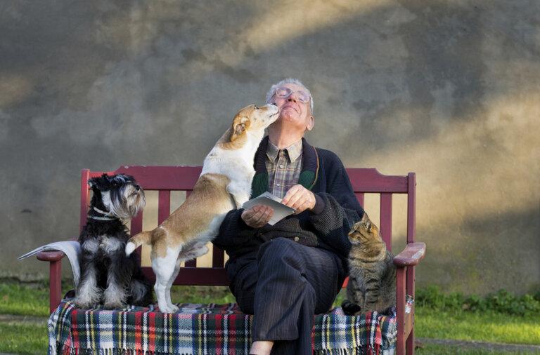 пожилые животные