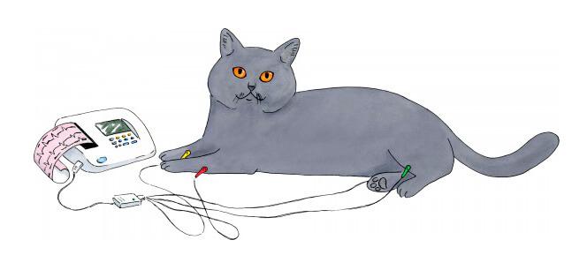 ЭКГ коту