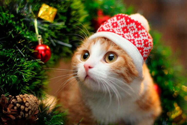 Кот в шапочке