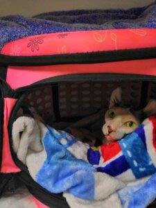 неонатальный стационар для кошек