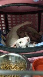неонатальный стационар для котят