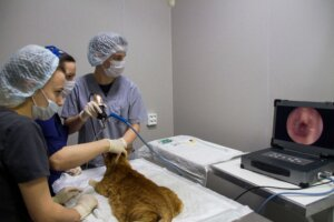 Эндоскопия коту