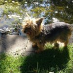 Перелом у щенка — Клинический случай