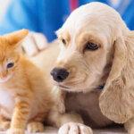 Самые необходимые ветеринарные услуги для кошек и собак. ТОП 5