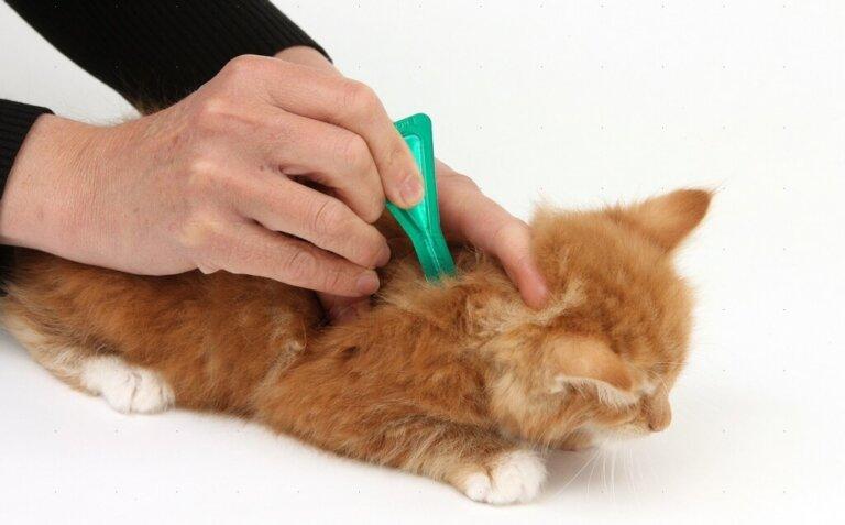 Обработка котенка оп блох