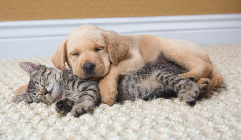 Котенок и щенок спят