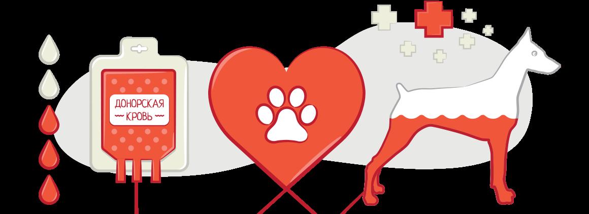 Животные доноры
