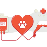 Хвостатые доноры: как питомцы спасают друг друга