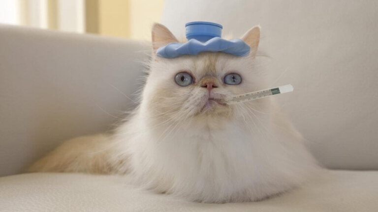 Инфекционный стационар для животных