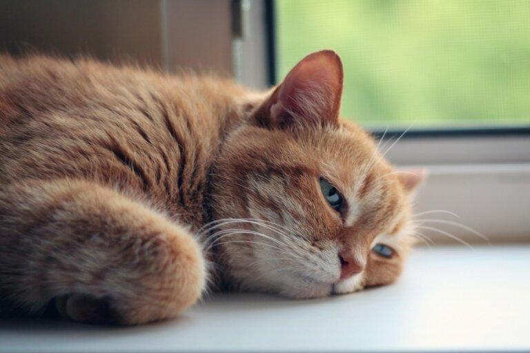 как уберечь кошку от жары