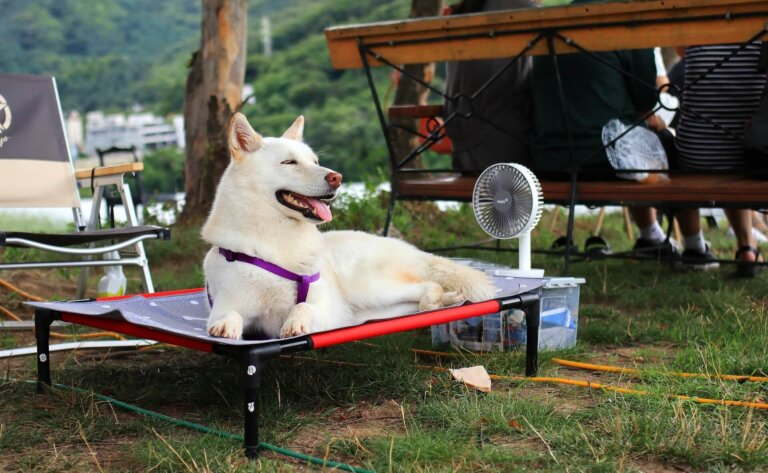 как уберечь собаку от жары